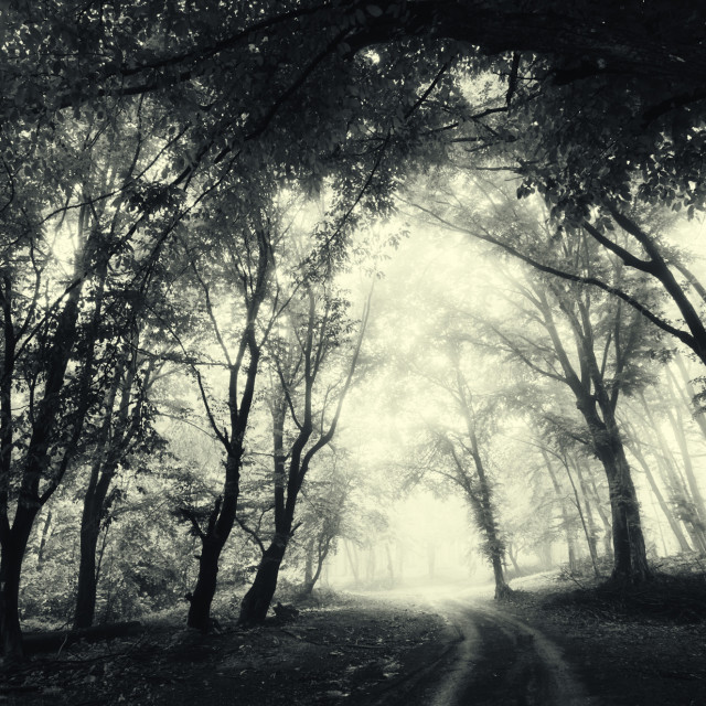 """Road throught fantasy misty forest. Surreal landscape with trees in fog"" stock image"