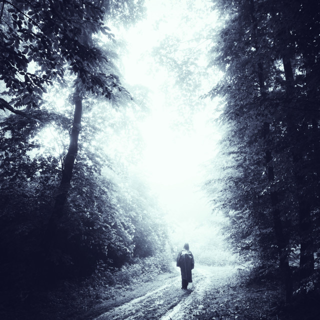 """Scary Halloween forest. Man silhouette on woods path at night"" stock image"