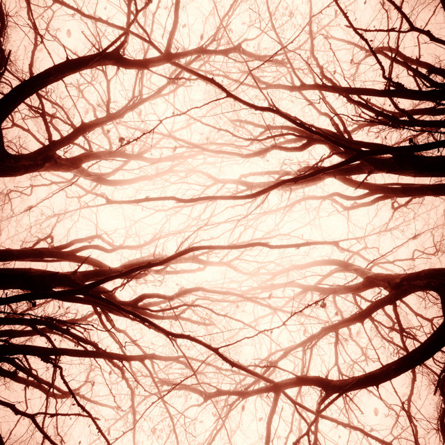 """scary creative abstract symmetrical tree branches background"" stock image"