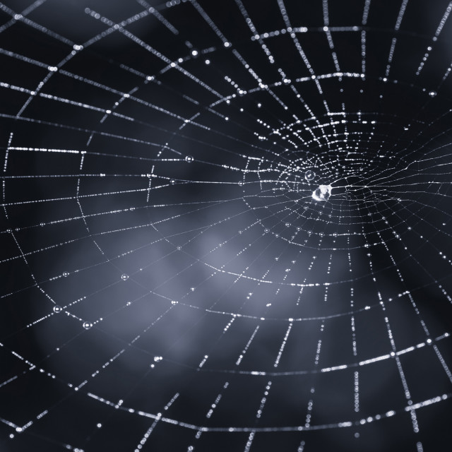 """abstract dark scary spider web background"" stock image"
