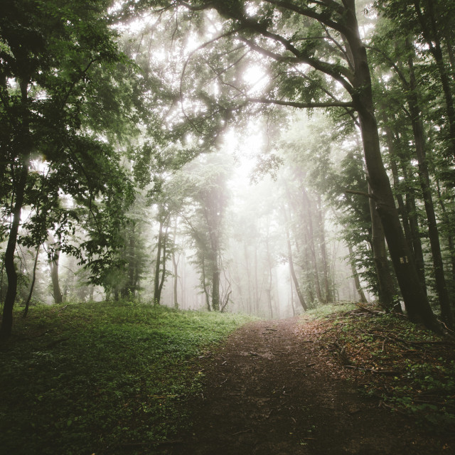 """forest path in landscape with trees and fog"" stock image"