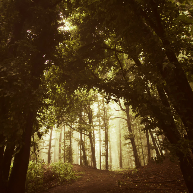 """Forest path in autumn. Misty woods landscape background"" stock image"