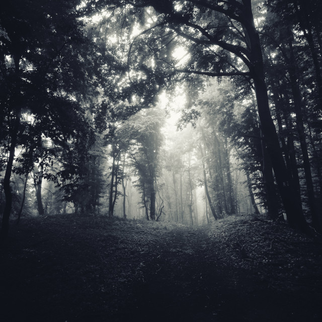 """dark Halloween landscape with trees in mist and forest path"" stock image"