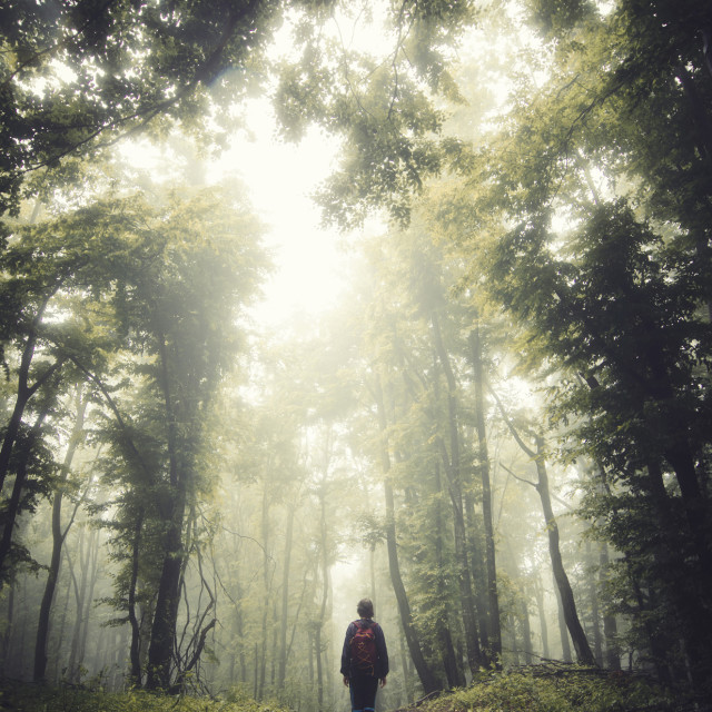 """man walking on forest path, fantasy landscape"" stock image"