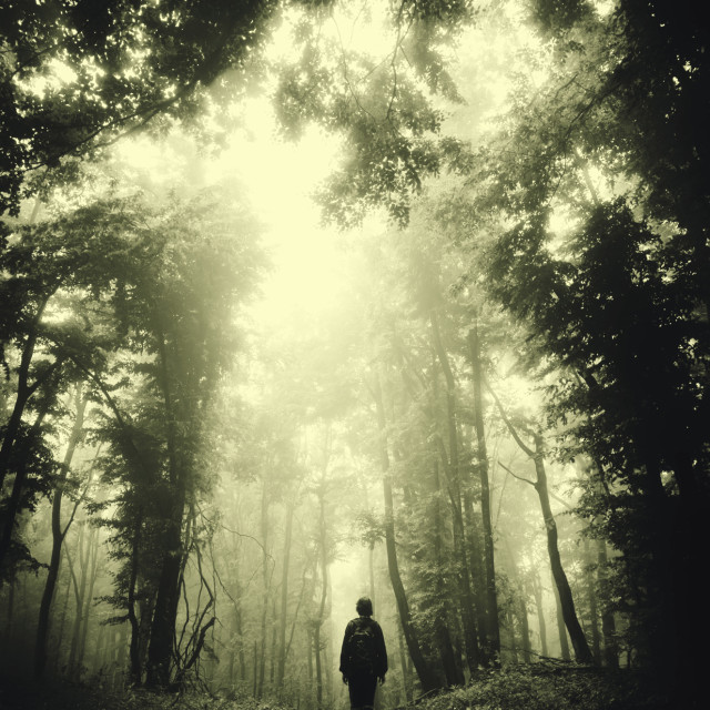 """Surreal dark forest. Gloomy landscape with man walking on forest road"" stock image"