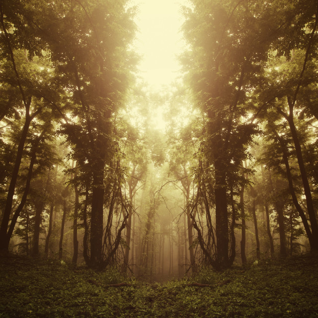 """surreal symmetrical forest in sunset light"" stock image"