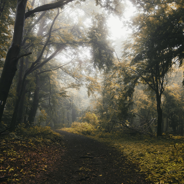 """autumn forest path landscape with misty rainy weather"" stock image"