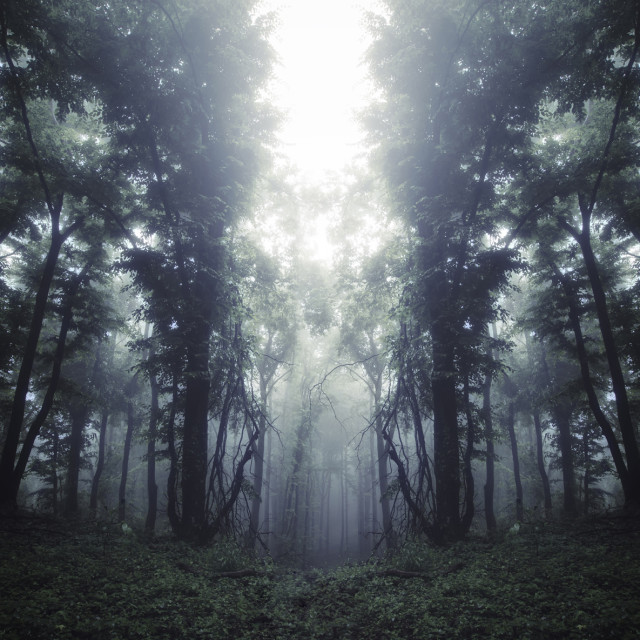 """dark mysterious surreal forest background"" stock image"
