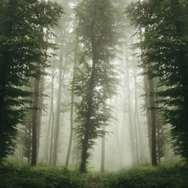 """green forest nackground"" stock image"
