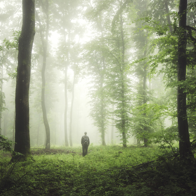 """man in green forest with fog"" stock image"