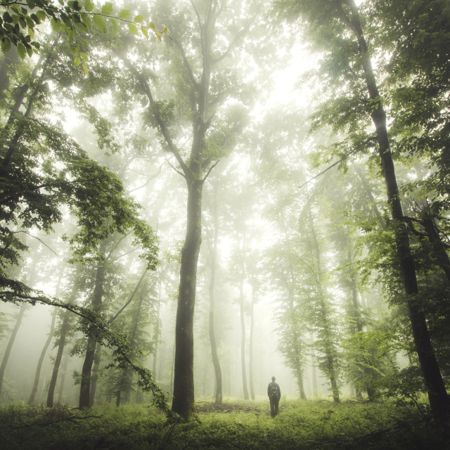 """Man in nature. Natural forest landscape on rainy weather with lush vegetation"" stock image"