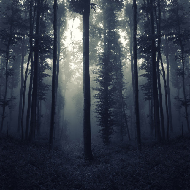 """mysterious dark forest with trees in fog"" stock image"