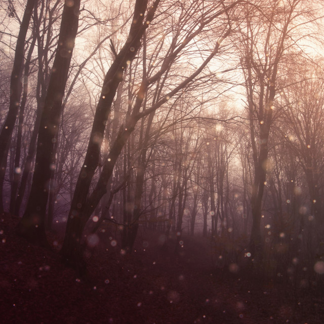 """""""magical sparkles in fantasy forest at sunset"""" stock image"""