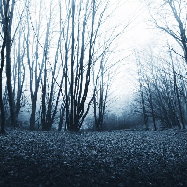 """scary twisted trees in haunted forest, Halloween forest background"" stock image"