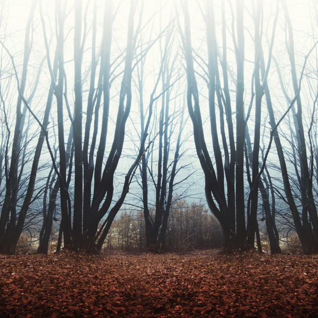 """misty forest background"" stock image"
