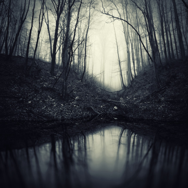 """dark scary Halloween atmosphere forest landscape"" stock image"