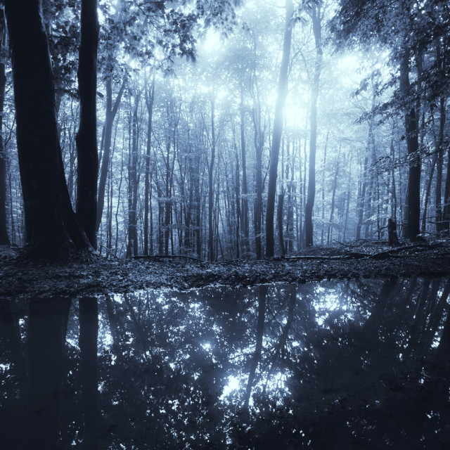 """fantasy forest background, magical light in dark woods"" stock image"