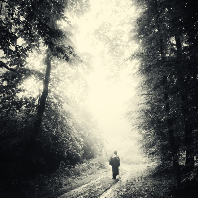 """Scary Halloween landscape. Dark gloomy forest in fog with strange figure on road"" stock image"