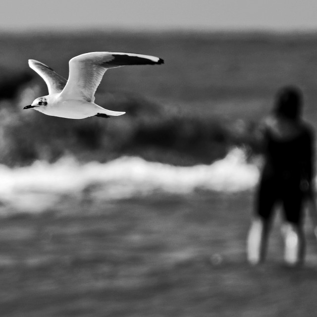"""Seagull and a surfer"" stock image"