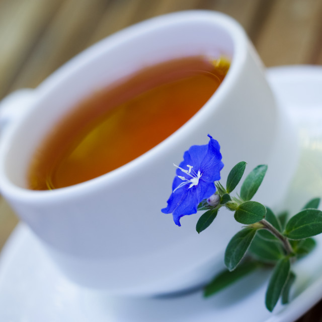 """Blooming blue flower with blurry cup of tea on wooden table"" stock image"