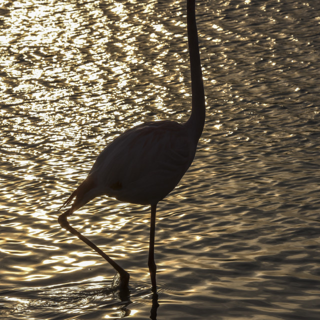 """""""Flamingo in the Camargue , France"""" stock image"""