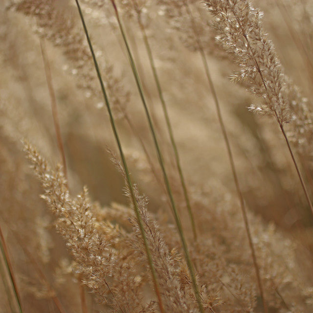 """""""Leaves of grass"""" stock image"""