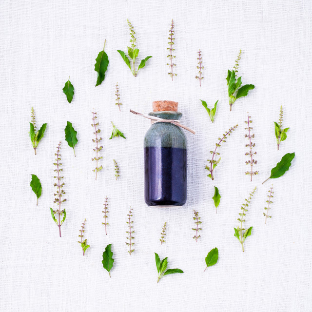 """""""Bottle of essential oil with fresh holy basil leaves and flowers setup with..."""" stock image"""