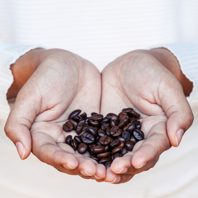 """""""Closeup coffee bean in women hands concept for good morning and giving..."""" stock image"""