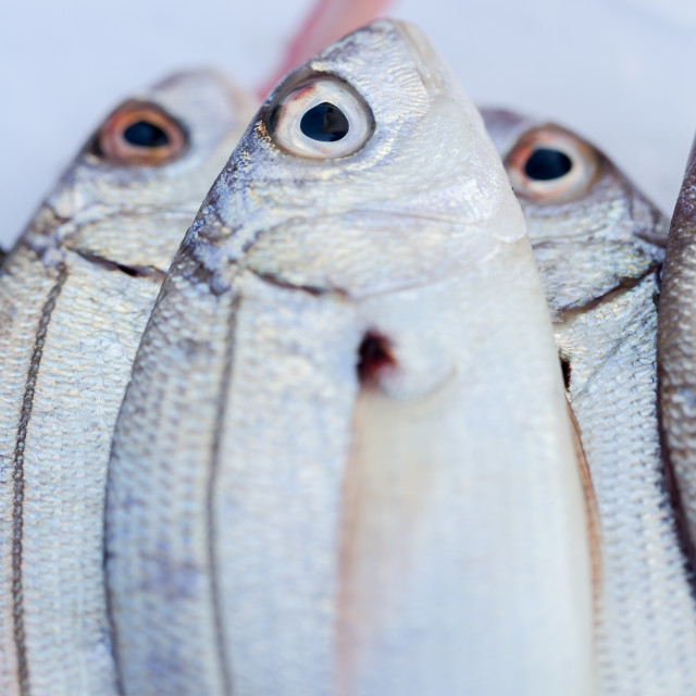 """""""Fresh fishes and other seafood on market in Morocco ready for se"""" stock image"""
