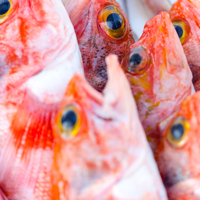 """""""Fresh redfishes and other seafood on market in Morocco ready for"""" stock image"""