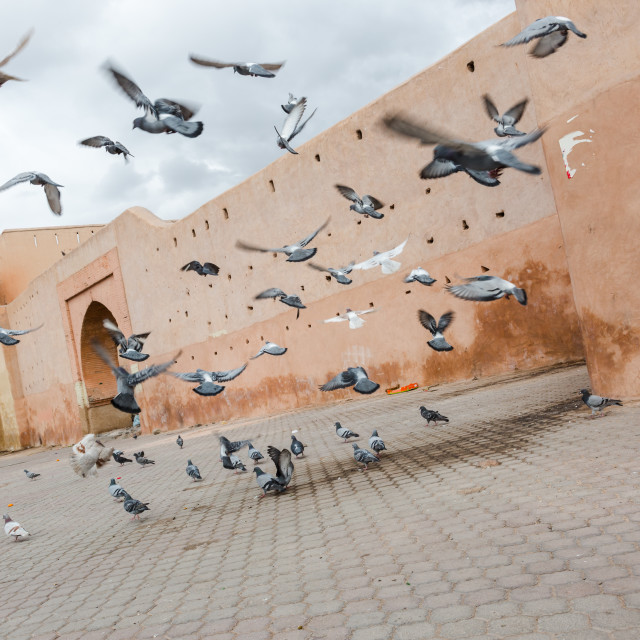 """Dynamic flying doves at the old town medina Marrakech"" stock image"
