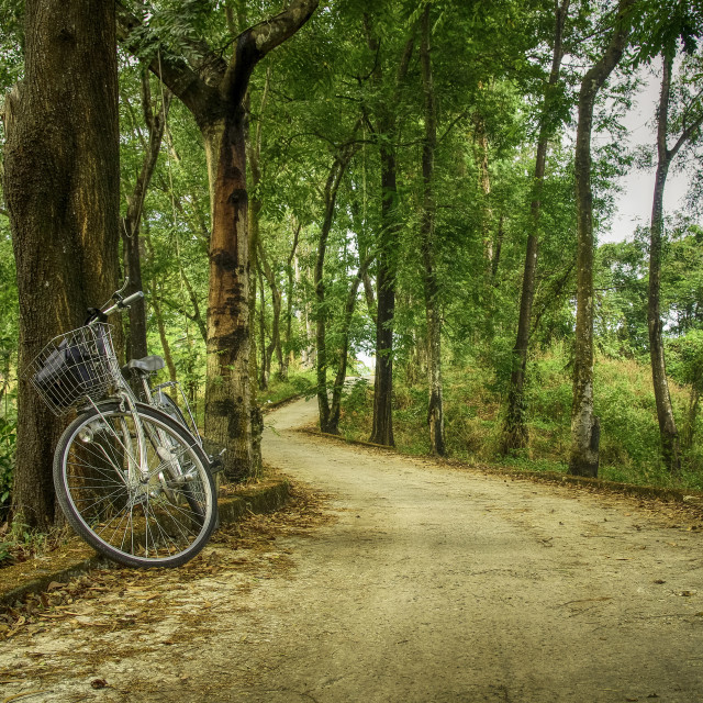 """Bicycle beside big tree on a tree road"" stock image"
