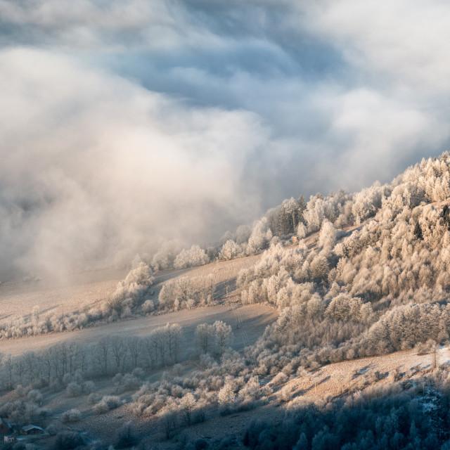 """""""Frosty beauty"""" stock image"""