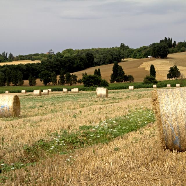 """Tuscany hay bales"" stock image"