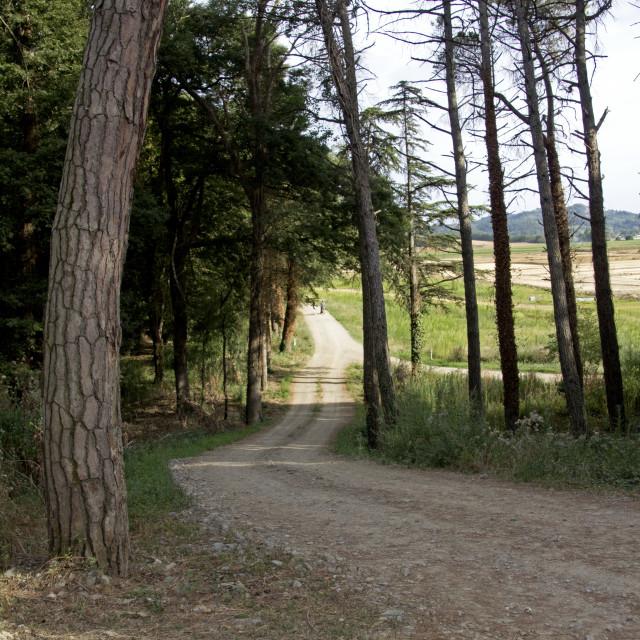 """""""Tuscany wood pathway"""" stock image"""