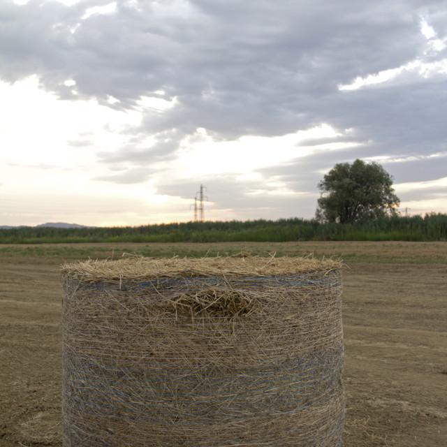 """""""Tuscany hay bale"""" stock image"""