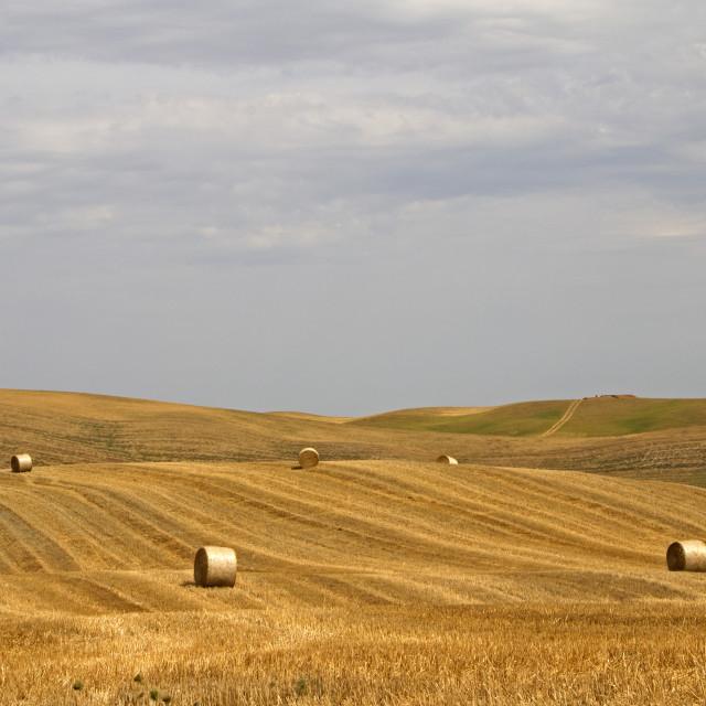 """Tuscany scenery"" stock image"