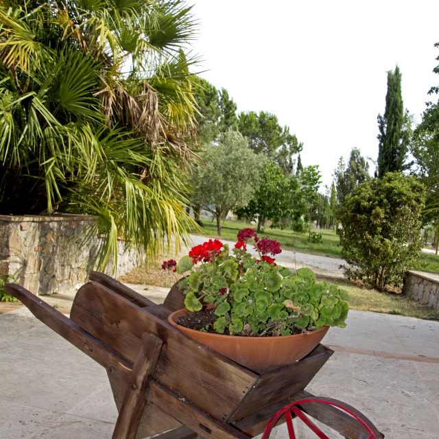"""Tuscany, wheelbarrow"" stock image"