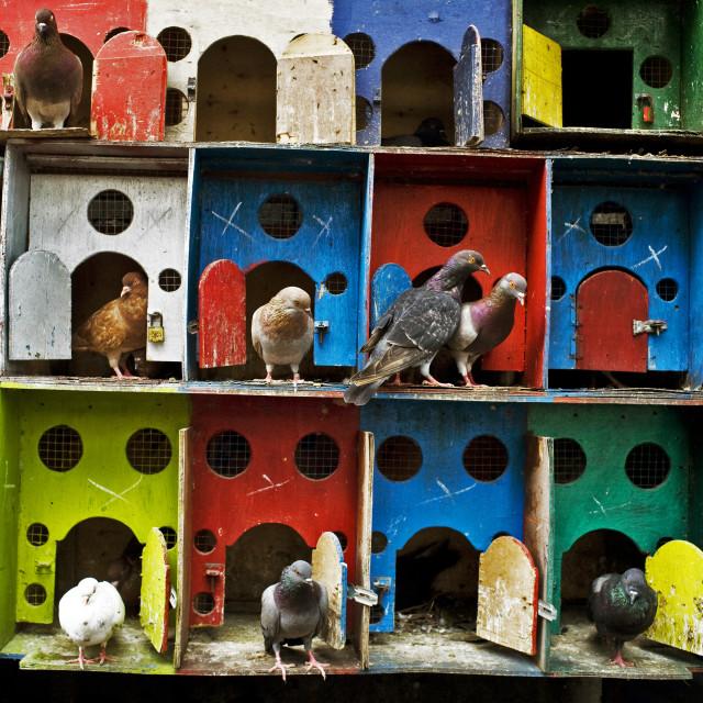 """Pigeon house"" stock image"