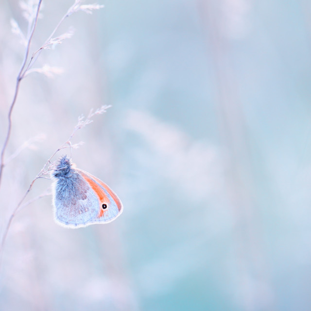 """Butterfly fond of silence"" stock image"