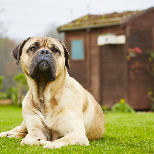 """""""Dog in the garden"""" stock image"""