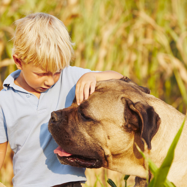 """Little boy with large dog"" stock image"