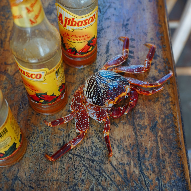 """A crab with hot sauce"" stock image"