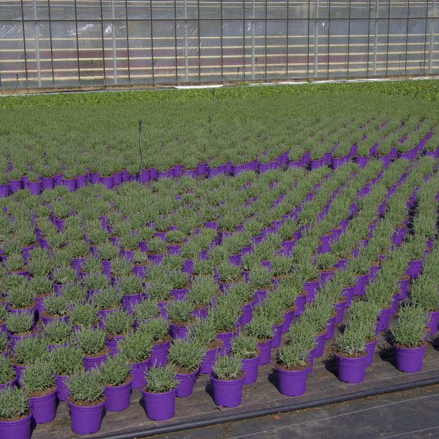 """""""Plant nursery"""" stock image"""