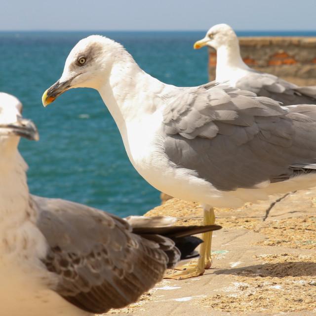 """""""Gulls of Cadiz"""" stock image"""