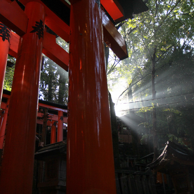 """Inari Shrine in Sunshine"" stock image"