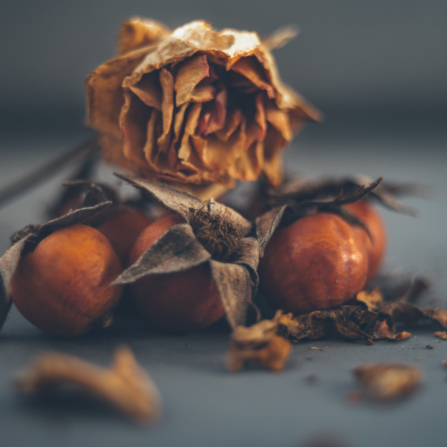 """Rose hip"" stock image"