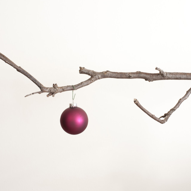 """One Christmas ball hanging on branch"" stock image"
