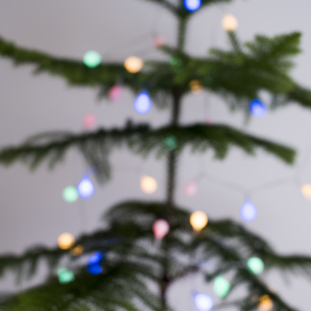 """Soft focus natural Christmas tree with lights"" stock image"