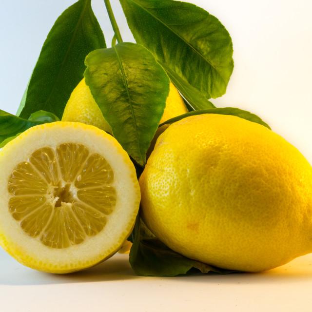 """The Fresh lemon"" stock image"